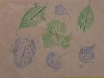 Leaf Rubbings(Kid craft)